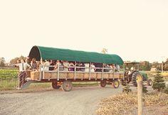 Wedding transportation. http://www.myweddingconcierge.com.au #weddings #transport