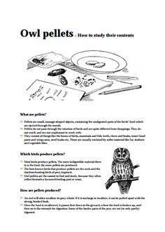 Here's a simple owl pellet bone sorting chart. | Owls/Owl Pellets ...