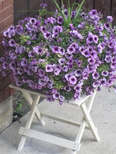 petunias from a friend - by colleen winter My Flower, Flowers, Flower Pictures, Petunias, Floral Wreath, Wreaths, Winter, Plants, Home Decor