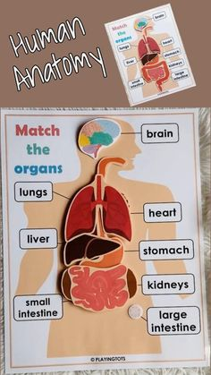 Physical Activities For Kids, Human Body Activities, Science Projects For Kids, Preschool Learning Activities, Science Experiments Kids, Science For Kids, Outside Activities For Kids, Printable Activities For Kids, Human Body Systems