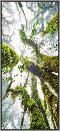 Mountain rainforest -  moss - tree --- photo by Michael Schober www.gdtfoto.de #Bergregenwald forest wood wald tree moss -- GDT - EUROPÄISCHER NATURFOTOGRAF DES JAHRES 2016