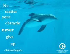 Winter the dolphin quote. This quote is a good saying to live by. Dolphin Quotes, Dolphin Facts, Orcas, Dolphin Tale 2, Clearwater Marine Aquarium, Wale, Marine Biology, Animals Of The World, Ocean Life