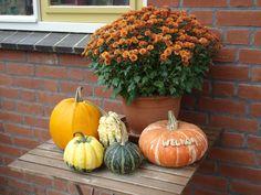 Pompoenen en kalebassen Pumpkin, Vegetables, Halloween, Winter, Food, Winter Time, Pumpkins, Essen, Vegetable Recipes