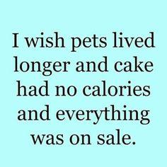 Day 347: i had a wish.