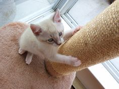 http://www.katespetcorner.com/2013/08/top-10-tips-how-do-i-get-my-cat-to-use.html