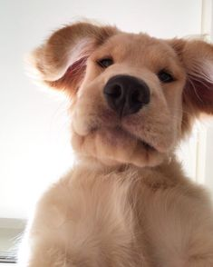 - Funny Selfies - Funny Selfies images - - The post Selfie! appeared first on Gag Dad. Baby Animals Pictures, Cute Animal Pictures, Animals And Pets, Cute Little Animals, Cute Funny Animals, Funny Dogs, Cute Baby Dogs, Cute Dogs And Puppies, Doggies