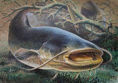 Main 411902 original Wildlife Paintings, Wildlife Art, Fish Paintings, Catfish Tattoo, Fish Artwork, River Monsters, Japanese Folklore, Bass Fishing Shirts, Fish Drawings