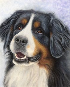 Pet Portraits & Animal Art by UK Artist Donna | Dog Portraits Drawn & Painted by Commission