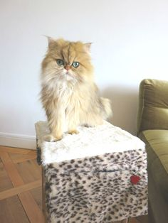 Cat Grooming Long Hair *** You can get additional details at the image link. #CatGrooming