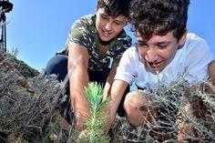 Arranca la reforestación de Veneguera y Tabaibales.