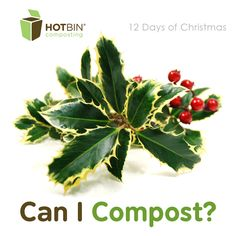 Day 1: Holly and the Ivy. Discover which Christmas plants can and cannot be #composted in the #HOTBIN. http://www.hotbincomposting.com/blog/the-holly-and-the-ivy.html | #gardening #christmas #compost