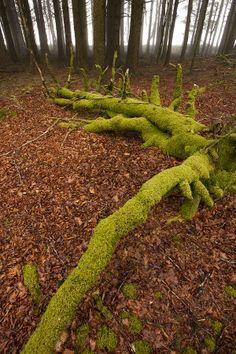✯ Misty Woods - Dartmoor, UK