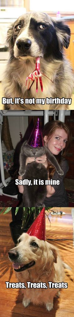 pets and birthdays