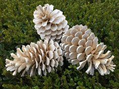 Šišky z lesa stačí len zaliať a nechať pôsobiť: Keď ich vyberiete, budú vyzerať ako z porcelánu, úžasné!