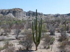 Baja Mexico: Baja Desert Landscape