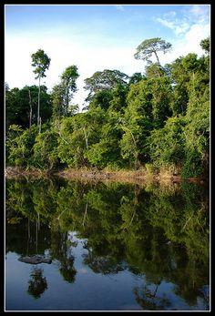 Beautiful jungle of Surinam