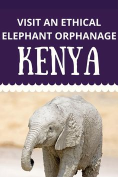 """""""Want to see baby elephants in Kenya? Not sure how to do it ethically? Here's how! The Sheldrick Wildlife Trust does incredible work rescueing and releasing orphans - here's everything to know for planning your trip! Things to do in Kenya / See elephants ethically / Ethical elephant orphanage """" Sheldrick Wildlife Trust, Kenya Travel, Baby Elephants, Elephant Art, Wildlife Conservation, Nairobi, Animals Of The World, Plan Your Trip, Challenges"""