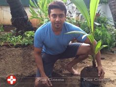 Picture 826301 | Suriya - Suriyas My Tree Challenge to Aamir Khan Mahesh Babu and Sudeep Photos Tamil Pluz Cinema