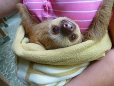 Aagh!! if i had a little sloth i don't think I'd mind being single forever.