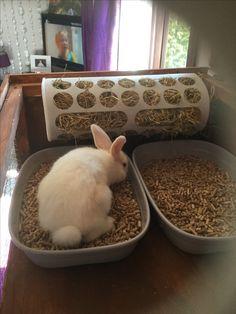 Rabbit litter tray and hay feeder diy ikea