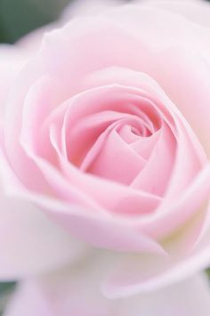 20 - The sweet scent of the pink roses we sniffed.