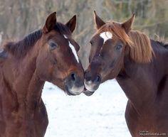 Sabías que las personas no son los únicos seres del reino animal a los que les gusta dar besos. Pájaros, perros, caballos, gatos y hasta caracoles....