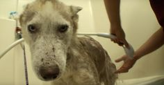 Dog Slated For Euthanasia Because They Thought No One Wanted Him Was Luckily Rescued Just In Time