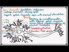 ▶ Best Action Potential explanation - YouTube