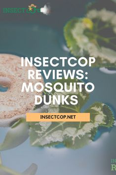 Considering many questions regarding the product, we purchased the Mosquito Dunks and rigorously tested them for months. Curious to see what we found out?  #InsectCop #mosquitodunks #mosquitocontrol #mosquitotips #pestcontrol #insectfact #insects #pestfacts #pestcontrolfacts #entomology #insectworld #insectguru #bug #insect #entomologist #insectworld #bugs Mosquito Control, Pest Control, Mosquito Larvae, Bug Insect, Bugs, Insects, Beetles, Bed Bugs Treatment