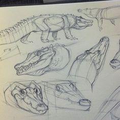 Some croc studies before bed Animal Sketches, Animal Drawings, Cool Drawings, Drawing Sketches, Drawing Animals, Drawing Ideas, Sketching, Creature Drawings, Dinosaur Art