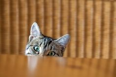 how to train your cat to stay off the counters. Don't squirt your cat with water or yell or hit. There's a much more effective and humane way to train kitty to keep her paws off the counter. Here are my tips.