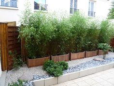 While common in most Asian homes that have enough land surrounding it, bamboo garden are not something that you usually hear about in the American home. Bamboo Garden, Bamboo Plants, Garden Planters, Potted Bamboo, Fence Garden, Back Gardens, Small Gardens, Outdoor Gardens, Garden Screening