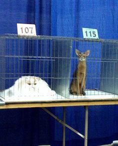 Liquid Cat Vs. Solid Cat (from the Poke)