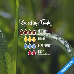 Goodbye Funk - Essential Oil Diffuser Blend