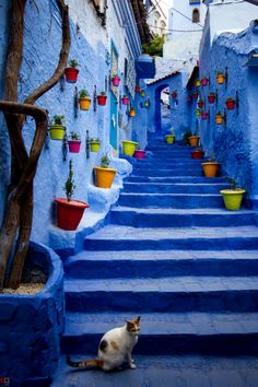 Flowerpots... Chefchaouen, a gorgeous small town with blue-washed walls in northwest Morocco via me.moonapple.net