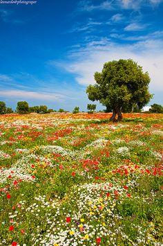 Primavera - Altamura - Puglia