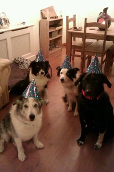 HAHAHA dog birthday party