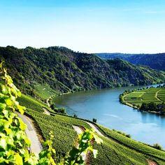 #winefacts: La región de Mosel en Alemania es mundialmente reconocida por la calidad de su Riesling. Los mejores viñedos se encuentran en cuestas inclinadas a la orilla del río Mosel y sus vinos ofrecen aromas florales y a frutos verdes. #winefacts #thewineissue #wine #vino #wein #alemania #germany #germanwine #riesling #mosel #winelovers #winelover #worldofwine #winetasting #enjoying #travel #winestagram #instawine