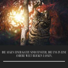 Wer gerne Katzenbilder sehen möchte,der besucht doch gerne meine Instagram Seite. / the_fantastic_cats// #katze#fotografieren#ideen#haustiere Cats, Animals, Instagram, Pets, Gatos, Animales, Animaux, Animal, Cat