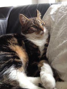 Belle Kat | Pawshake