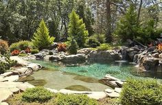 Magnificent Backyard Lagoon