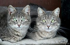 Domestic cats by Darko Plohl, via Dreamstime