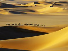 Tuareg Nomads with Camels in Sand Dunes of Sahara Desert, Arakou by Johnny Haglund. Photographic Print from Art.com.