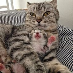 A NEW MAMA KITTY'S LIFE REDEFINED