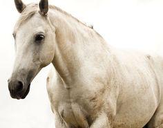 horse photo  TalledBluePhotos  ETSY