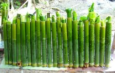 Lemang, sticky rice cake from Aceh, which is being cooked by put into a bamboo reed and then burned.