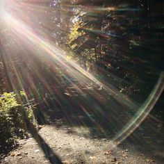 Mossom Creek Sunbeam Forest Road by NyxStudioArt Forest Road, Forests, Diy Art, North America, Northern Lights, American, Artwork, Photography, Painting
