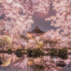 Amazing sakura Find out when we have more -. Ab Ins Beet, Cherry Blossom Japan, Cherry Blossoms, Beautiful Places, Beautiful Pictures, Wonderful Places, Sakura, Scenery Wallpaper, Anime Scenery