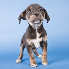 Michael Kloth released the book Shelter Puppies, showcasing his photography of adorable puppies available for adoption. The great news is that his professional portraits helped the puppies get adopted in a matter of days or weeks.