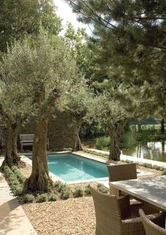 Image result for modern landscaping with crushed granite olive trees lavender #ModernLandscaping